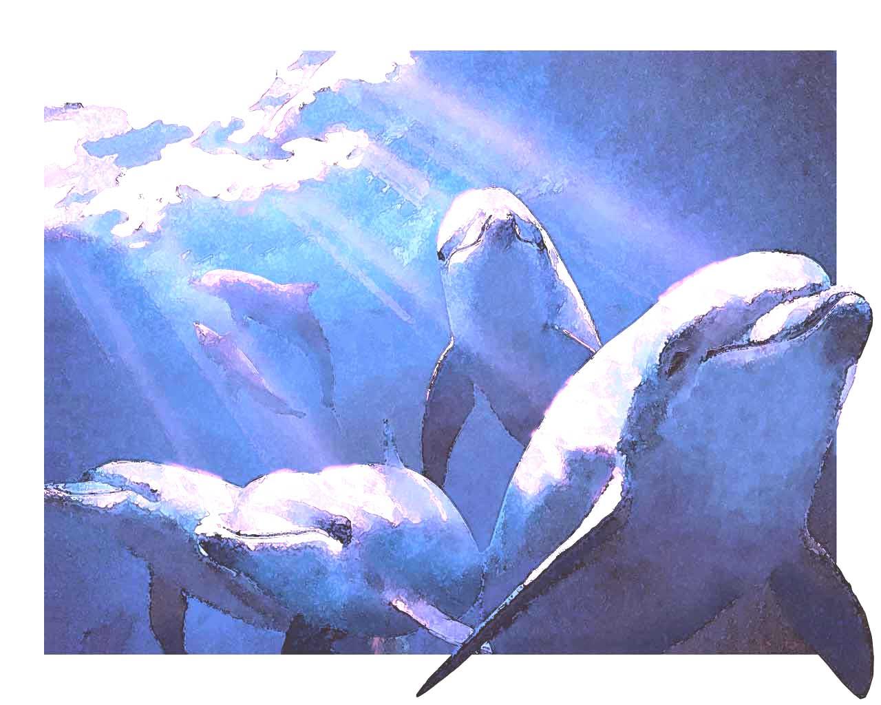 イルカの画像 p1_31